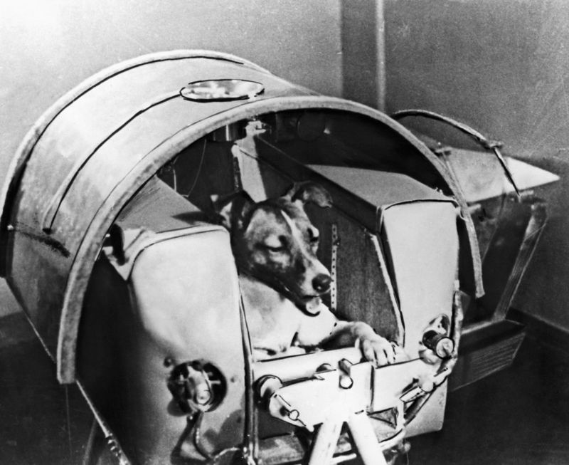 Laika - the russian space dog